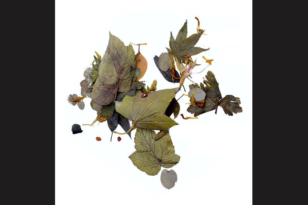 Sylvie Cambet_teinture végétale_matériaux bruts_2