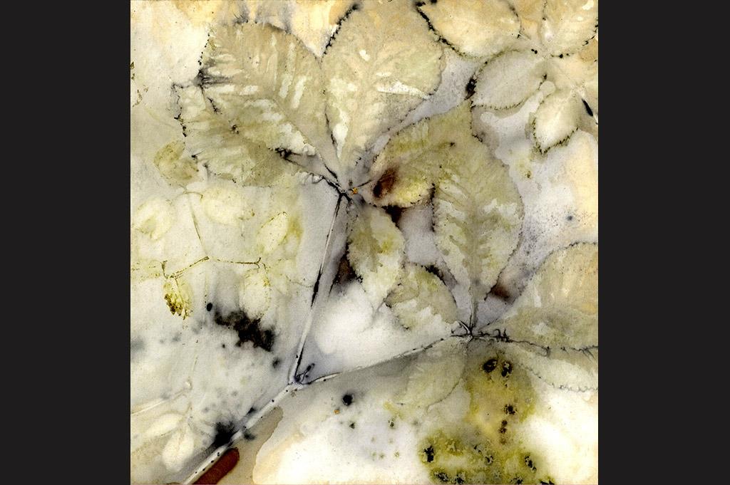 Sylvie Cambet_teinture végétale_feuille jaune